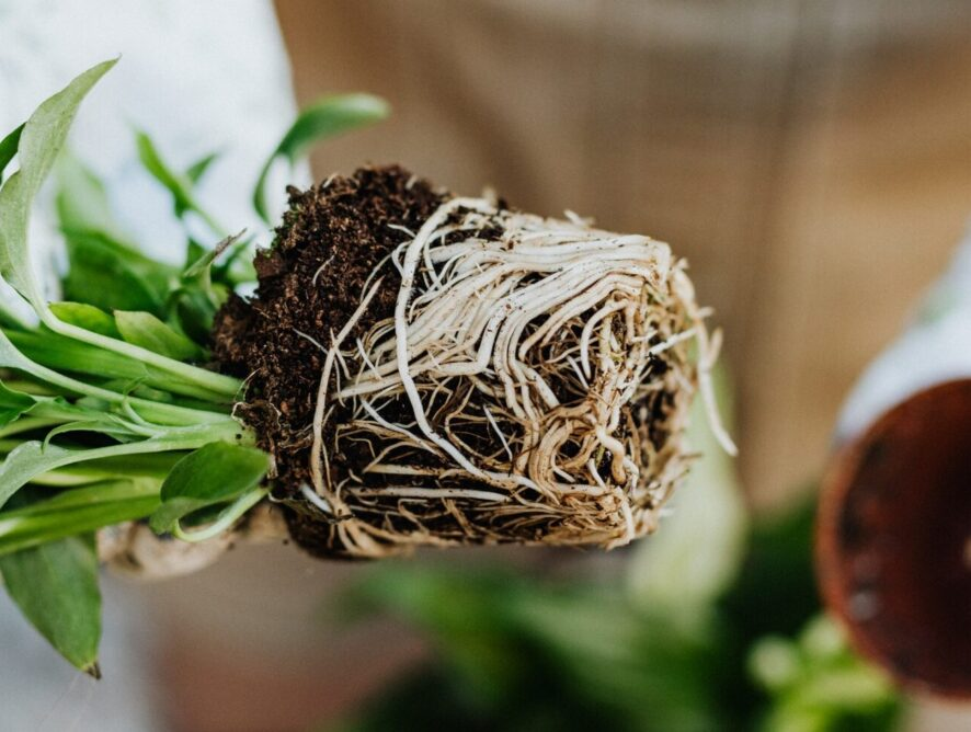 Plant Biology: The roots, shoots, leaves, flowers, and fruits