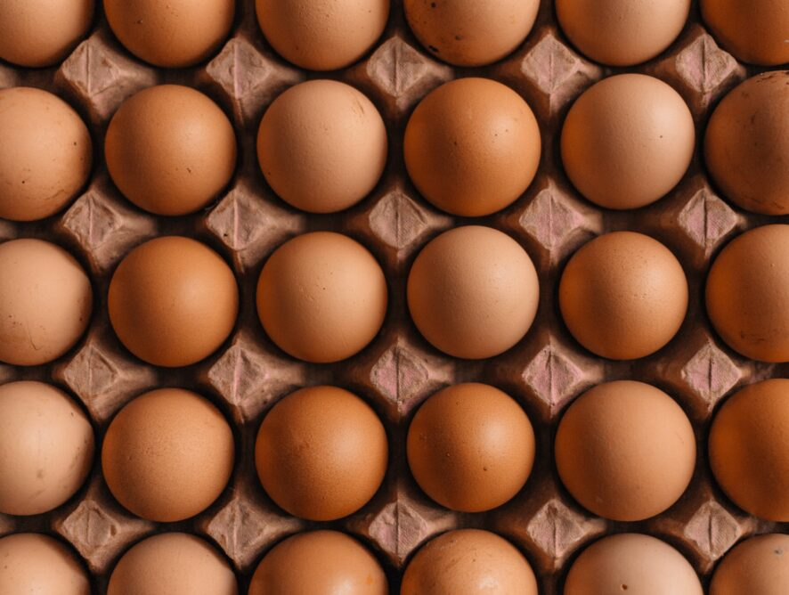 Let's Learn about Eggs!