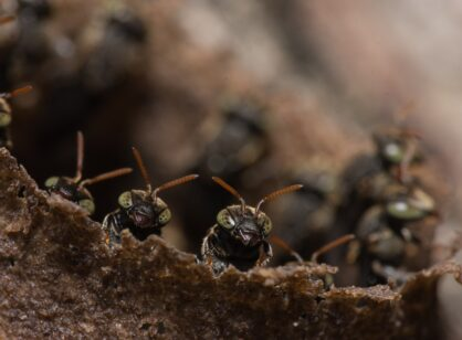Your brain will be all abuzz with Insects